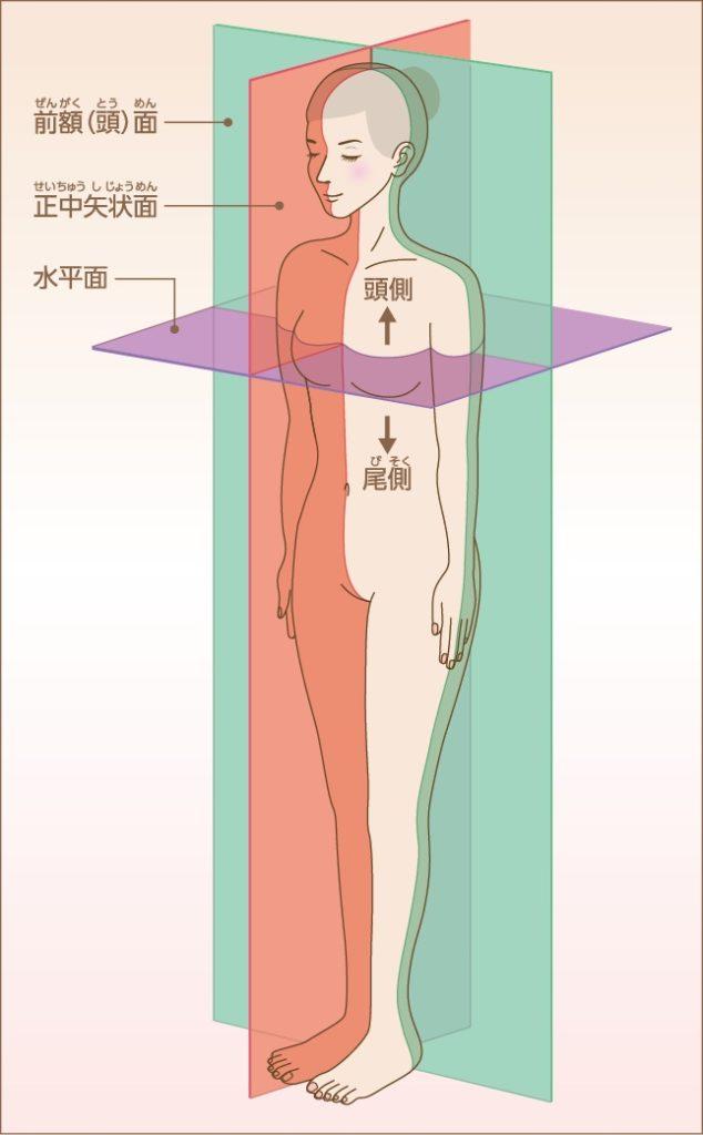 体軸の説明画像2