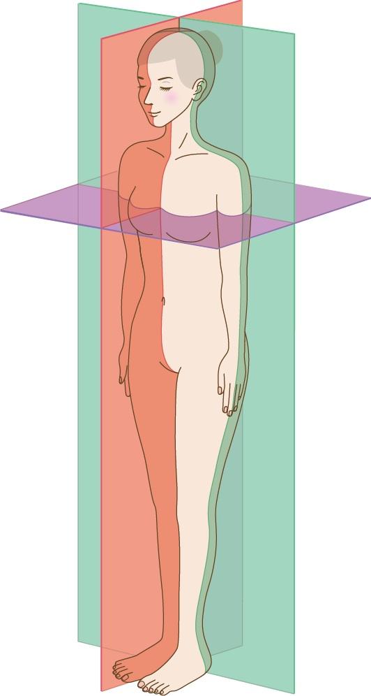 体軸の説明画像1